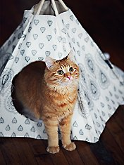 Printed Cat Tipi