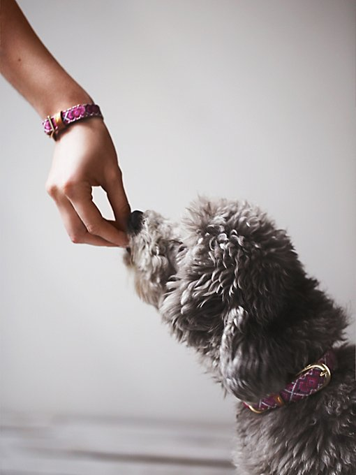 Friendship Dog Collar